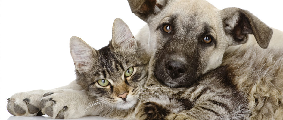 Image to introduce pet products section